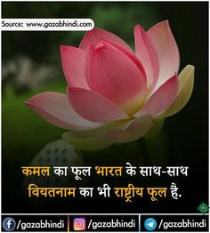 Image may contain: flower, plant and nature General Knowledge Book, Gernal Knowledge, Knowledge Quotes, Interesting Science Facts, Interesting Facts About World, Weird Facts, Fun Facts, Crazy Facts, Amazing Facts For Students
