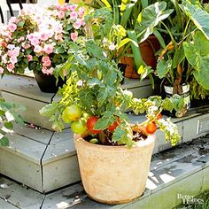 You don't need a yard to grow tomatoes. Containers offer great alternatives for gardening in small spaces.
