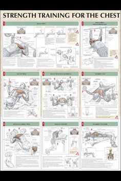 """Most weight lifters like to structure their week by having a """"chest day"""" or """"back day"""" or """"leg day"""" so here's a basic chest workout to pump up the pectoralis muscles!"""
