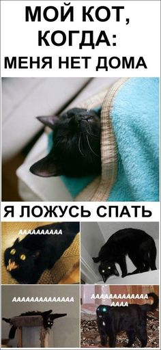 Коли так все насправді. Russian Jokes, Good Mood, Man Humor, Funny Animals, Humorous Animals, Funny Animal Comics, Funny Animal, Hilarious Animals, Funny Animal Pictures