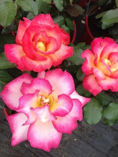 pretty flowers - Google Search