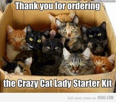 crazy cat lady starter kit jeannes