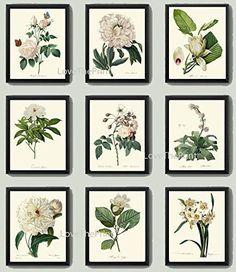Botanical Print Set of 9 Antique Beautiful Redoute White ... https://www.amazon.com/dp/B018T2P55K/ref=cm_sw_r_pi_dp_x_.NI3zbBT2Q5V5