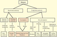 Memory and Homoeopathy - Homeopathy World Community