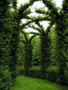 Hedge tunnel...this can be done FAST with Bugle Vine..since it grows so quickly...is TOUGH to kill off & grows back twice as big when you trim it.
