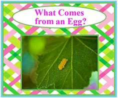 What Comes from an Egg? Children's Book - Have instant access to hundreds of high-quality eBooks for preschoolers through second graders at www.loving2read.com  only $4.99!