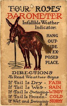 Vintage donkey tail barometer