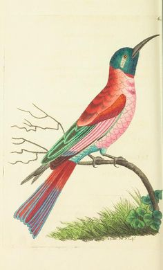 v.15 - The naturalist's miscellany, or Coloured figures of natural objects - Biodiversity Heritage Library