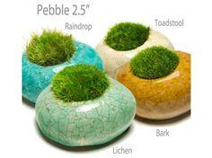 MossRocks!: Moss Planter Pebble 2.5 inch