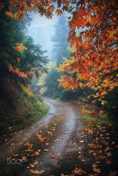 landscape-lunacy:Argyria Greece - by Makis Bitos Moonlight Photography, Nature Photography, Beautiful Places, Beautiful Pictures, Autumn Rain, Autumn Leaves, Way To Heaven, Autumn Scenes, Fall Pictures