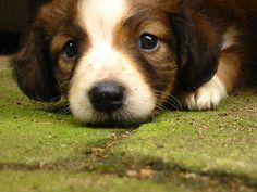 #Dog  Like,Repin,Share, Thanks!
