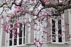 magnolias | İSTANBUL