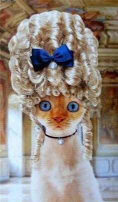 cats wiyh wigs   Wig