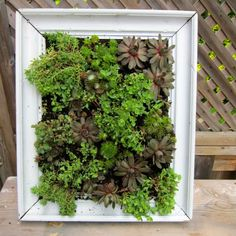 Our DIY vertical frame garden is perfect for small outdoor spaces!