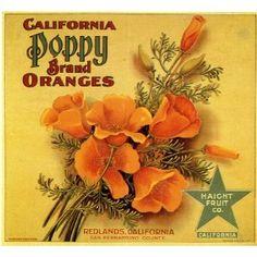 Redlands California Poppy Flowers Orange Citrus Fruit Crate Box Label Art Print
