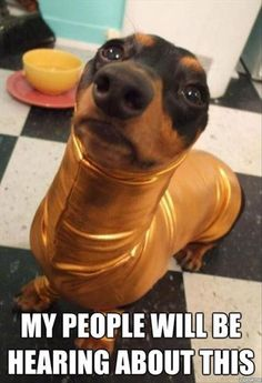 Dump A Day Attack Of The Funny Animals - 50 Pics