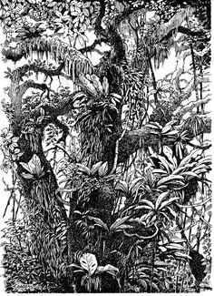 Plein Air Pen and Ink – Drawing The Motmot - Stift Jungle Drawing, Forest Drawing, Pen Illustration, Ink Illustrations, Pen Sketch, Sketches, Sketch Journal, Ink Pen Drawings, Plant Drawing