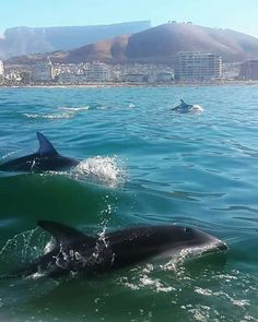 See Dolphins in Table Bay on a guided Kayak trip, Cape Town, South Africa. South Africa Safari, Cape Town South Africa, Tanzania Safari, South Afrika, Pretoria, Namibia, Le Cap, Jolie Photo, African Safari