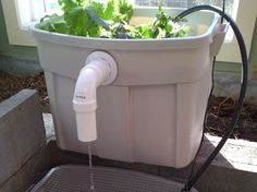 Budget prep; building your own aquaponics system on a budget and smaller scale!