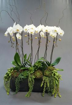 cascading orchids and trailing succulents - cascading orchids and trailing succulents cascading orchids and trailing succulents Orchid Flower Arrangements, Orchid Planters, Orchid Centerpieces, Orchid Pot, Succulent Arrangements, Faux Flowers, Silk Flowers, Deco Floral, Orchid Care
