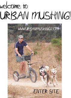 Urban Mushing (Dog Scootering)