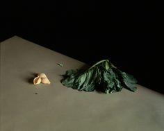 Santucci & Co. — Joss McKinley — Still Life