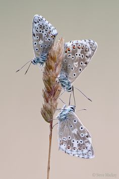 "500px / Photo ""Trio"" by Steve Mackay"
