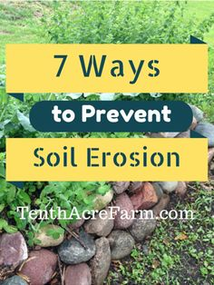 Taking care of the soil is crucial for the long-term viability of gardens and agricultural lands. Here's what's at stake and how to prevent soil erosion. Soil Improvement, Sloped Backyard, Yard Drainage, Trees To Plant, Preventing Soil Erosion, Hillside Landscaping, Soil, Soil Health, Landscaping Plants