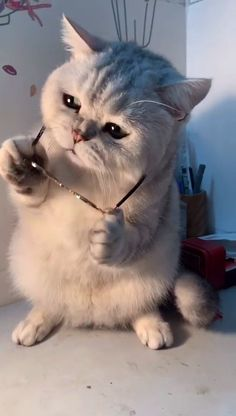 Funny Cute Cats, Cute Cat Gif, Cute Cats And Kittens, Cute Funny Animals, Cool Cats, Tiny Puppies, Cute Puppies, Cute Dogs, Funny Cat Compilation