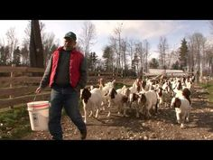 Boer Goats #goatvet also has good advice on http://www.goatvetoz.com.au
