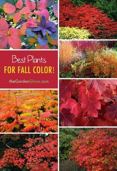 Garden Plants for Autumn Color Best Plants for Fall Color! Ideas & Tips!Best Plants for Fall Color! Ideas & Tips! Outdoor Plants, Outdoor Gardens, Landscape Arquitecture, Fall Plants, Gardening Gloves, Gardening Tips, Hydroponic Gardening, Organic Gardening, Autumn Garden