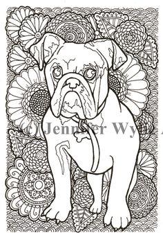 Bulldog Adult Coloring Page