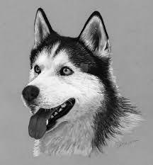 Horse Drawings, Pencil Art Drawings, Realistic Drawings, Animal Drawings, Colored Pencil Artwork, Colored Pencils, Husky Drawing, Animal Sketches, Husky Puppy