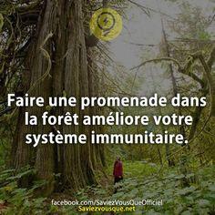 Faire une promenade dans la forêt améliore votre système immunitaire. | Saviez Vous Que?