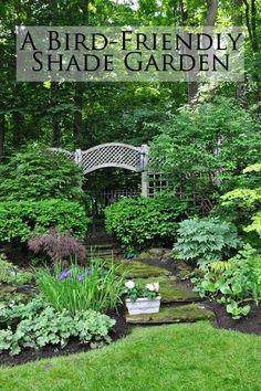A Bird-Friendly Shade Garden
