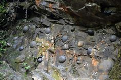 """Mysterious Cliff in China Lays """"Stone Eggs"""" Every 30 Years - http://www.odditycentral.com/travel/mysterious-cliff-in-china-lays-stone-eggs-every-30-years.html"""