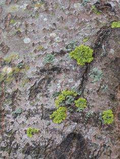 Kasper päätti alkaa luontokuvaajaksi. Luonnossa on paljon hienoja ja kuvauksellisia kohteita, joista ensimmäiseksi hän ajatteli suunnata kameransa puihin: nehän ovat suuria ja niistä on siksi varmasti helppo ottaa kuvia!  Mutta kuinkas sitten kävikään?