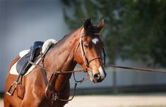 """Lunge Your Horse - The Correct Way - Southern States Cooperative.  """"Some horses are just plain hard to handle when they've had a long vacation from regular riding. Others are always calm and dependable. In either case, lunging may help get your horse ready for whatever type of riding you're going to do this spring.  'The point to lunging is to set up pecking order and train for obedience and correctness,' says trainer, instructor and clinician Valerie Netto."""""""