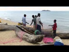 Fish Conservation in Lake Malawi - RIPPLE Africa