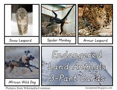 In Our Pond: Endangered Land Animals 3-Part Cards
