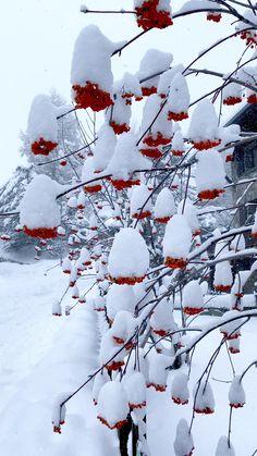 Landscape Photography, Nature Photography, French Alps, Ski Chalet, Nature Illustration, Zayn, Scenery, France, Candles