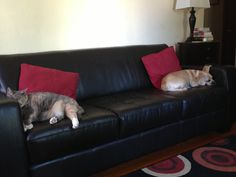 Home Theater 2-The girls in this house love to lie around...animals included