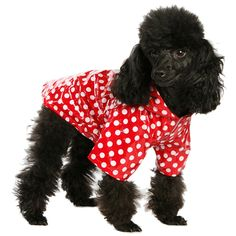 UrbanPup Red Polka Dot PVC Waterproof Raincoat (X-Small - Dog Body Length: / -- Check out this great image : Dog coats Baby Raincoat, Running In The Rain, Pet Fashion, Dog Carrier, Raincoats For Women, Medium Dogs, Dog Coats, Dog Harness, Dog Accessories