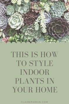 Follow these simple styling tips and show off your house plants to their best! #houseplants #plants #plantcare Faux Flowers, Real Flowers, Dried Flowers, Water Drip, Interior Styling, Interior Design, Roof Lantern, Hanging Pendants, Hanging Baskets