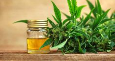 ElRoi/Shutterstock Cannabidiol (CBD), a compound found in hemp and cannabis plants, is increasingly popular in dietary supplements. The CBD industry Cannabis Plant, Cannabis Oil, Cannabis Edibles, Epilepsy Types, Endocannabinoid System, Cbd Hemp Oil, Oil Benefits, Rheumatoid Arthritis, Panic Attacks