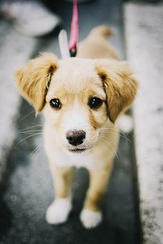 Doggyyyyy