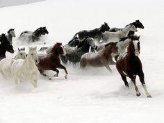 Imagem de http://4.bp.blogspot.com/-2dumgJEclhs/T5LA8qI0P2I/AAAAAAAAAX8/5_Y--x5_Zjo/s1600/Wallpaper-of-Horses-3.jpg.