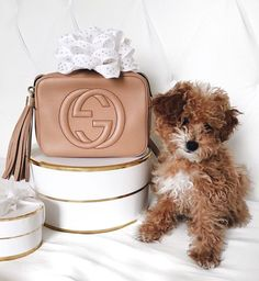 I need the bag and the puppy  CALLITOPIAN FBTWITTERIG PIN  SNAP