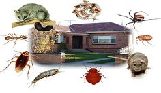 Pest Control: Why is a necessity