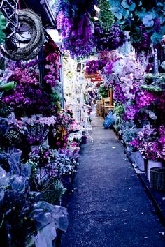 Purple Market, Bangkok, Thailand... Although I'm not sure I'd really want to go to Thailand, this is gorgeous.